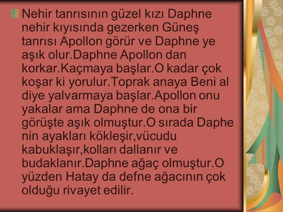 Nehir tanrısının güzel kızı Daphne nehir kıyısında gezerken Güneş tanrısı Apollon görür ve Daphne ye aşık olur.Daphne Apollon dan korkar.Kaçmaya başlar.O kadar çok koşar ki yorulur.Toprak anaya Beni al diye yalvarmaya başlar.Apollon onu yakalar ama Daphne de ona bir görüşte aşık olmuştur.O sırada Daphe nin ayakları kökleşir,vücudu kabuklaşır,kolları dallanır ve budaklanır.Daphne ağaç olmuştur.O yüzden Hatay da defne ağacının çok olduğu rivayet edilir.