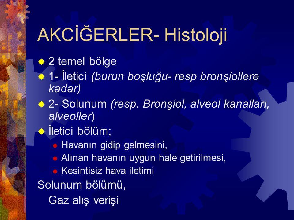 AKCİĞERLER- Histoloji