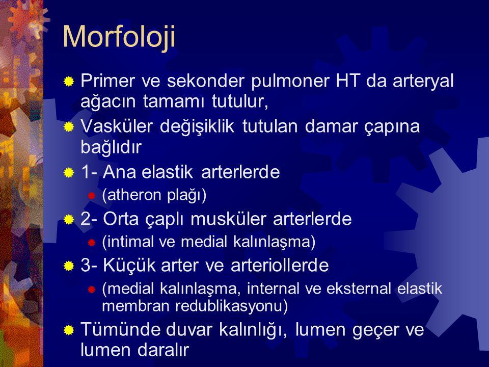 Morfoloji Primer ve sekonder pulmoner HT da arteryal ağacın tamamı tutulur, Vasküler değişiklik tutulan damar çapına bağlıdır.