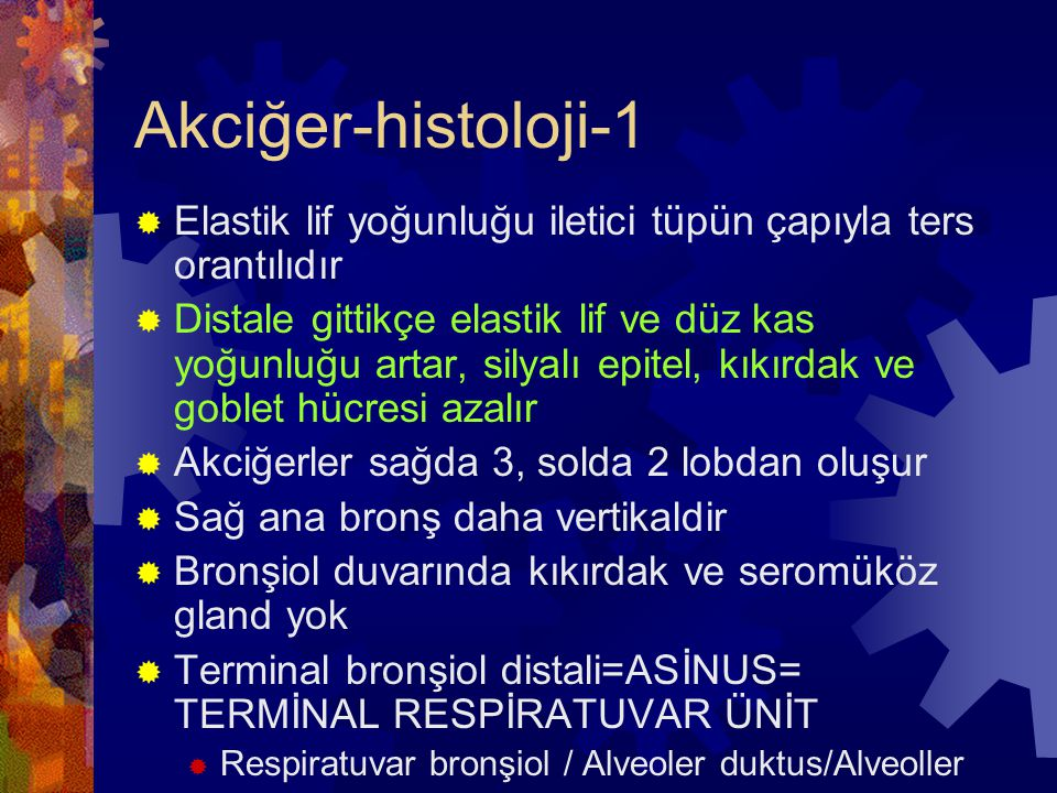 Akciğer-histoloji-1 Elastik lif yoğunluğu iletici tüpün çapıyla ters orantılıdır.