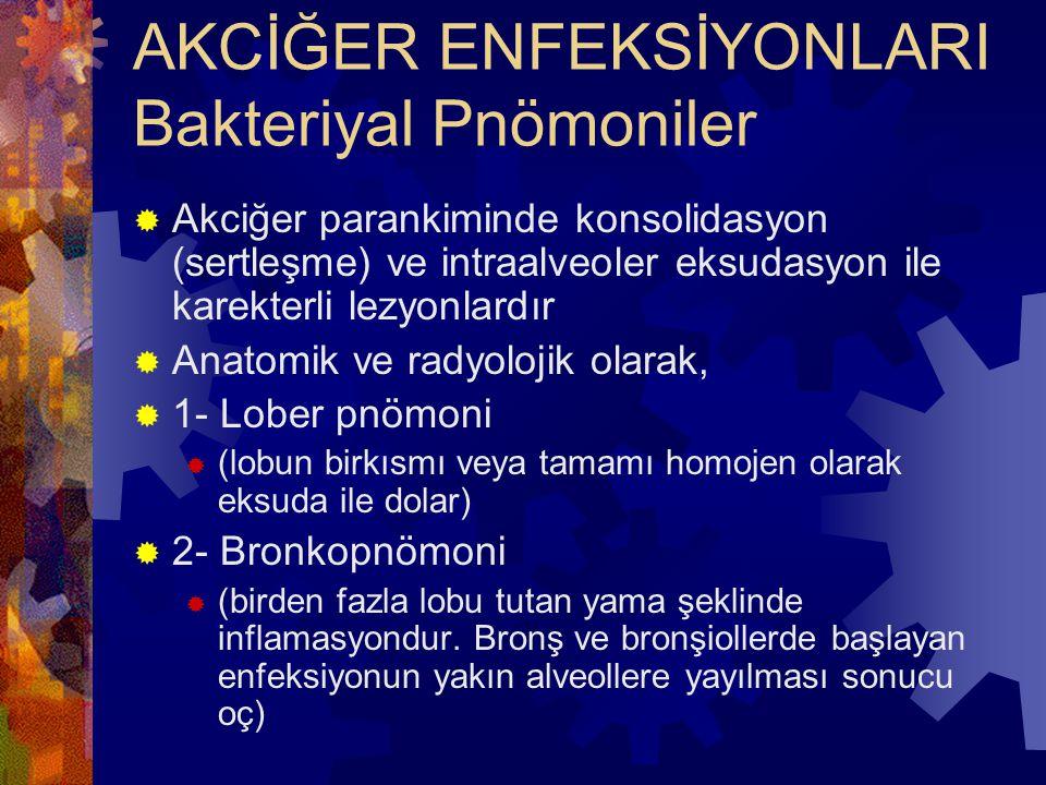 AKCİĞER ENFEKSİYONLARI Bakteriyal Pnömoniler