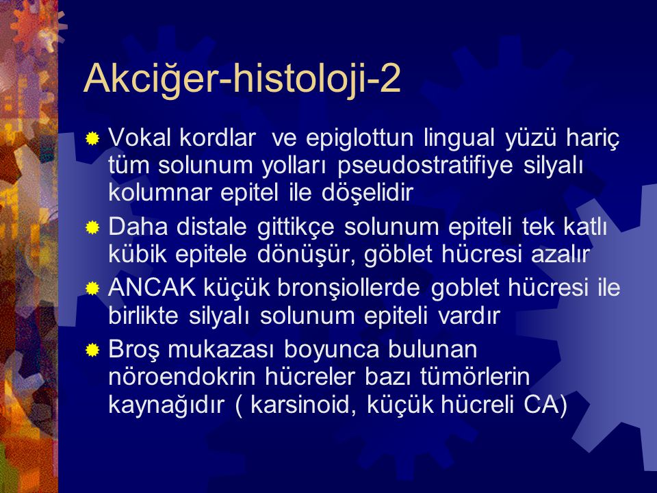 Akciğer-histoloji-2 Vokal kordlar ve epiglottun lingual yüzü hariç tüm solunum yolları pseudostratifiye silyalı kolumnar epitel ile döşelidir.