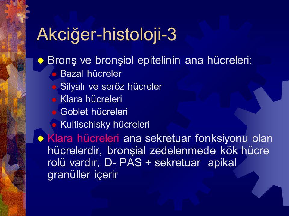 Akciğer-histoloji-3 Bronş ve bronşiol epitelinin ana hücreleri: