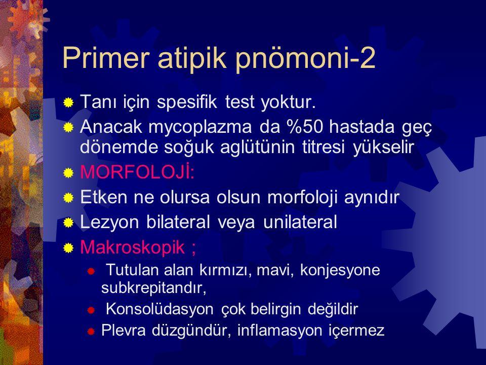 Primer atipik pnömoni-2