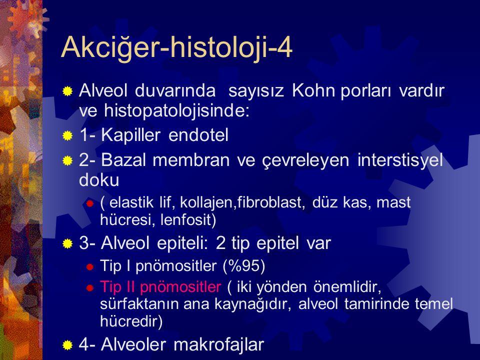 Akciğer-histoloji-4 Alveol duvarında sayısız Kohn porları vardır ve histopatolojisinde: 1- Kapiller endotel.