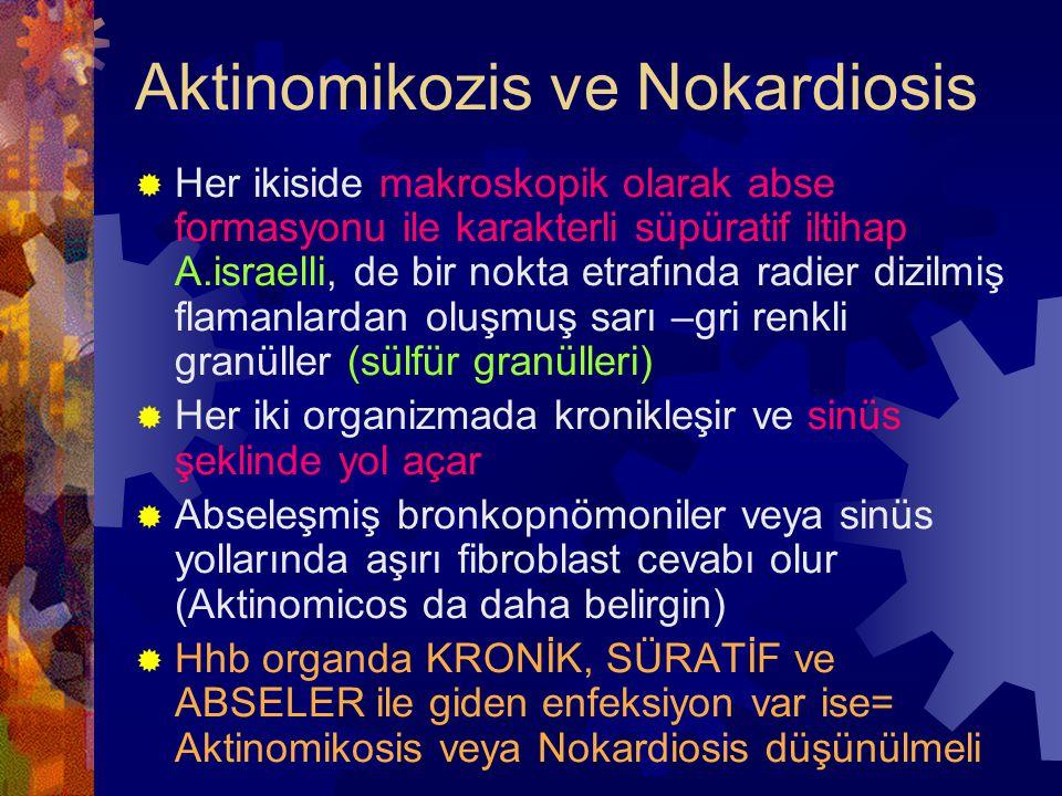 Aktinomikozis ve Nokardiosis