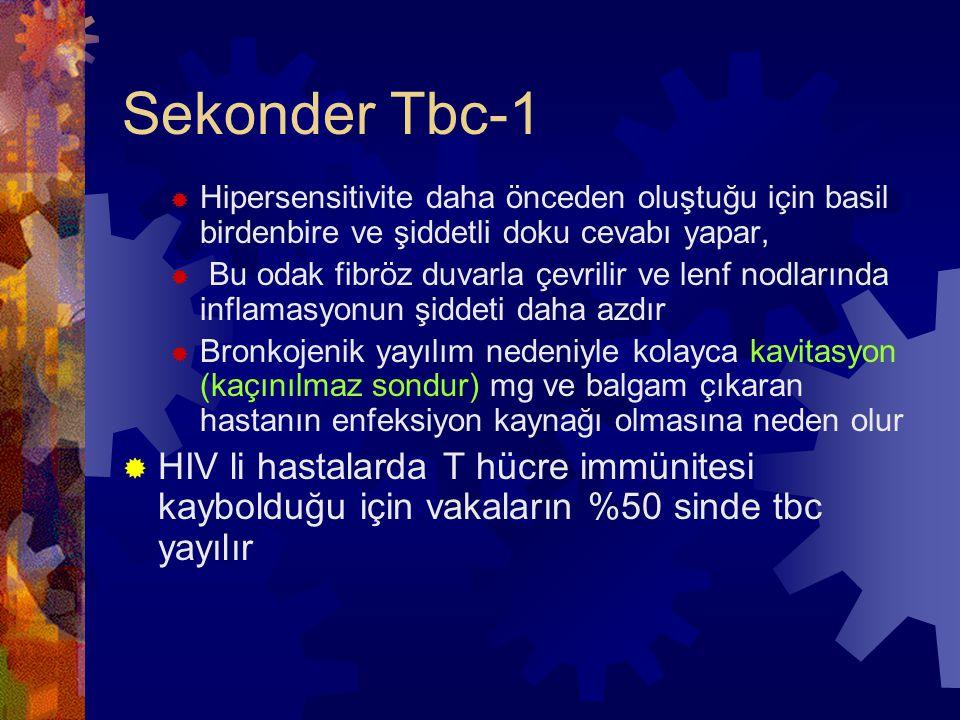 Sekonder Tbc-1 Hipersensitivite daha önceden oluştuğu için basil birdenbire ve şiddetli doku cevabı yapar,