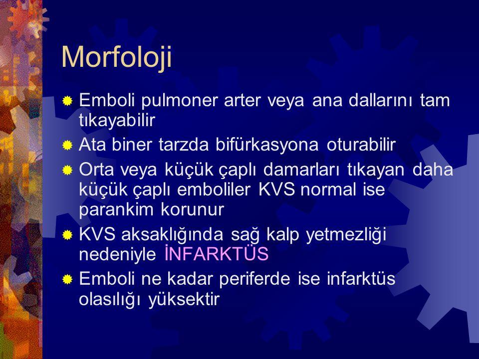 Morfoloji Emboli pulmoner arter veya ana dallarını tam tıkayabilir