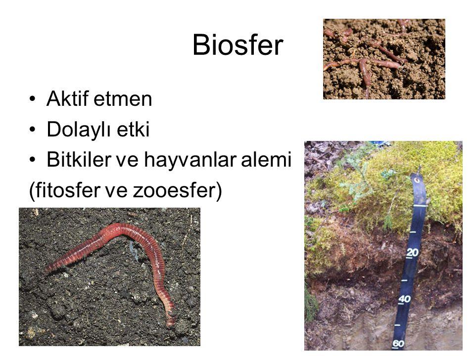Biosfer Aktif etmen Dolaylı etki Bitkiler ve hayvanlar alemi