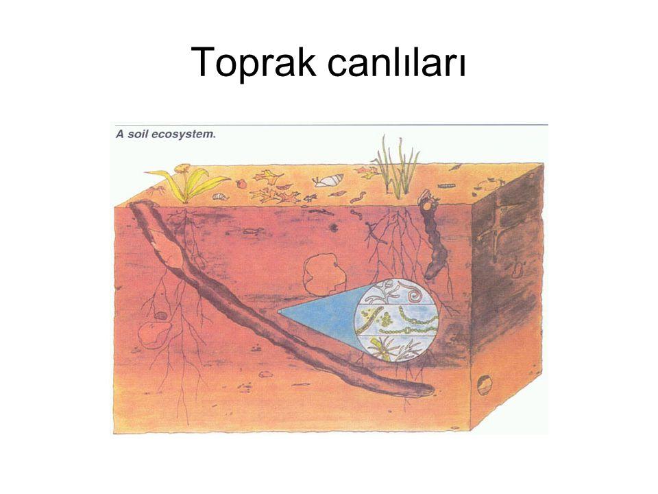 Toprak canlıları