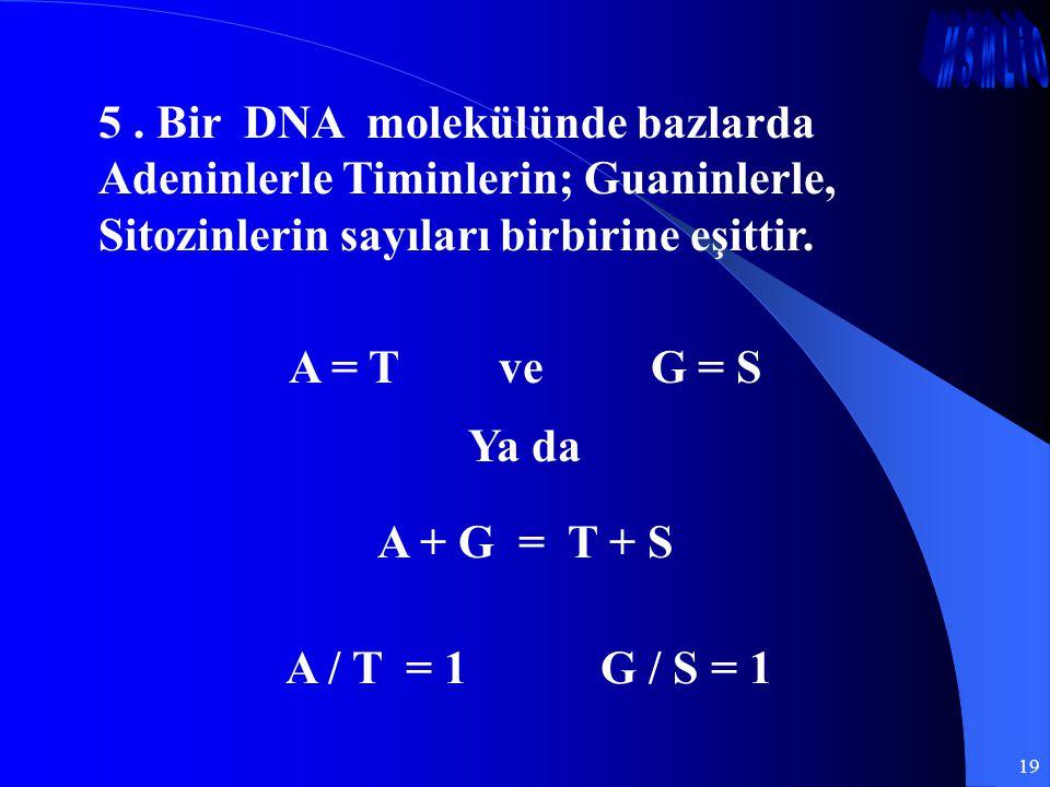 5 . Bir DNA molekülünde bazlarda Adeninlerle Timinlerin; Guaninlerle, Sitozinlerin sayıları birbirine eşittir.