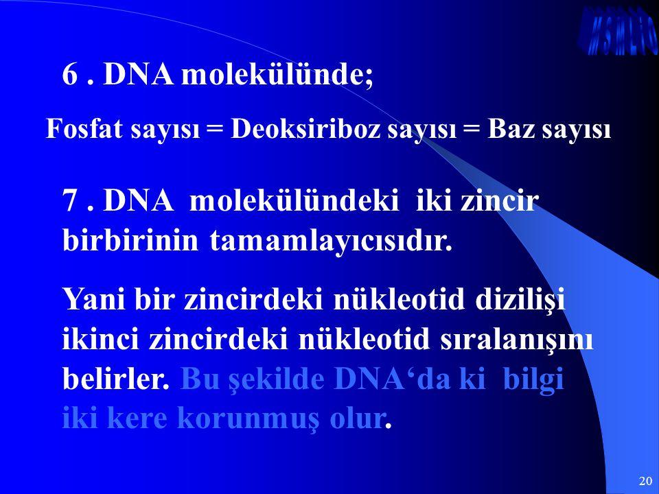 7 . DNA molekülündeki iki zincir birbirinin tamamlayıcısıdır.