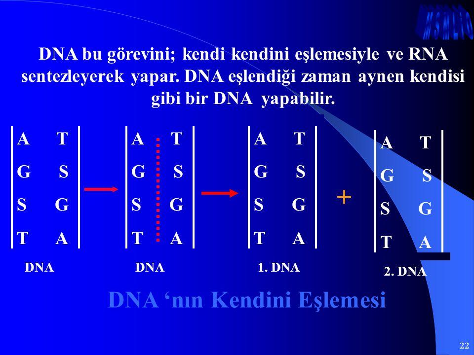 DNA 'nın Kendini Eşlemesi