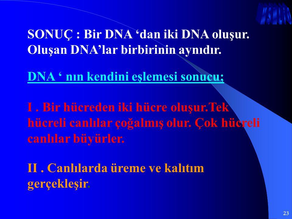 SONUÇ : Bir DNA 'dan iki DNA oluşur. Oluşan DNA'lar birbirinin aynıdır.