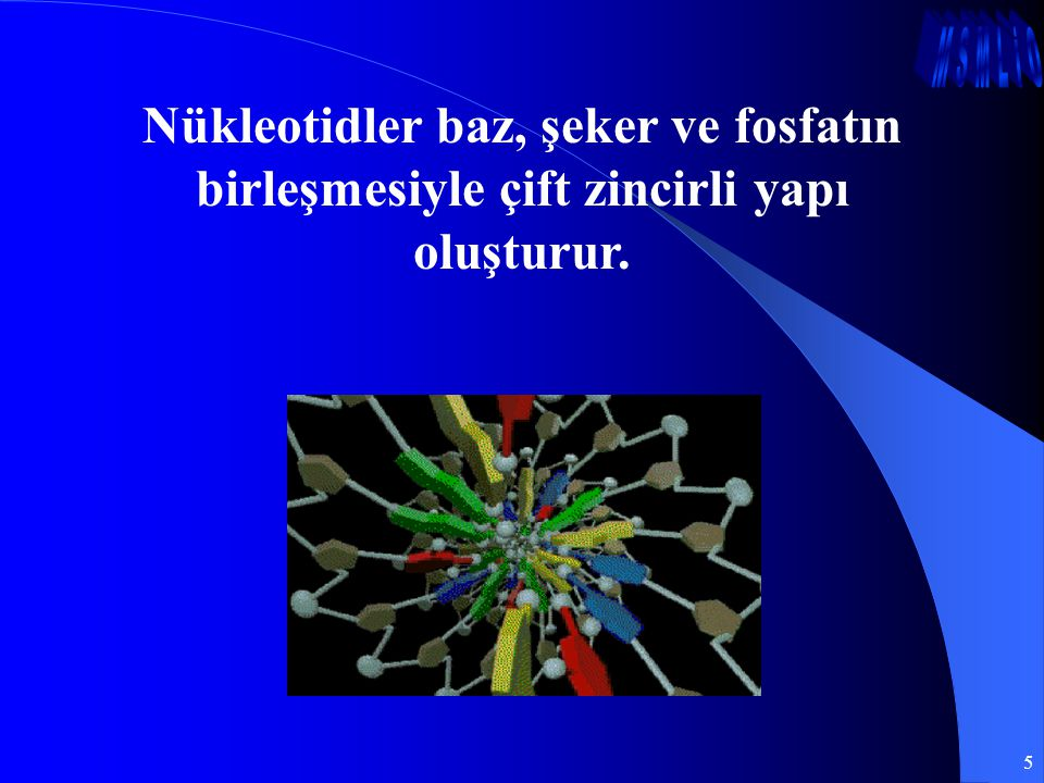 Nükleotidler baz, şeker ve fosfatın birleşmesiyle çift zincirli yapı oluşturur.
