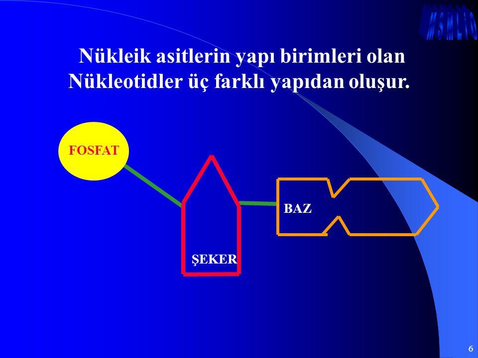Nükleik asitlerin yapı birimleri olan Nükleotidler üç farklı yapıdan oluşur.