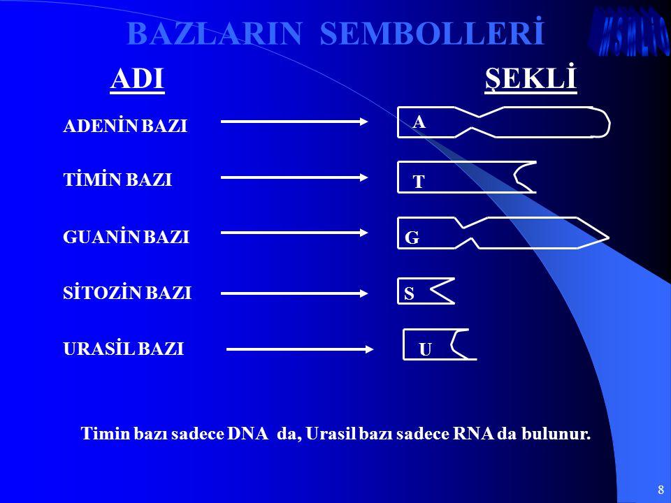 Timin bazı sadece DNA da, Urasil bazı sadece RNA da bulunur.