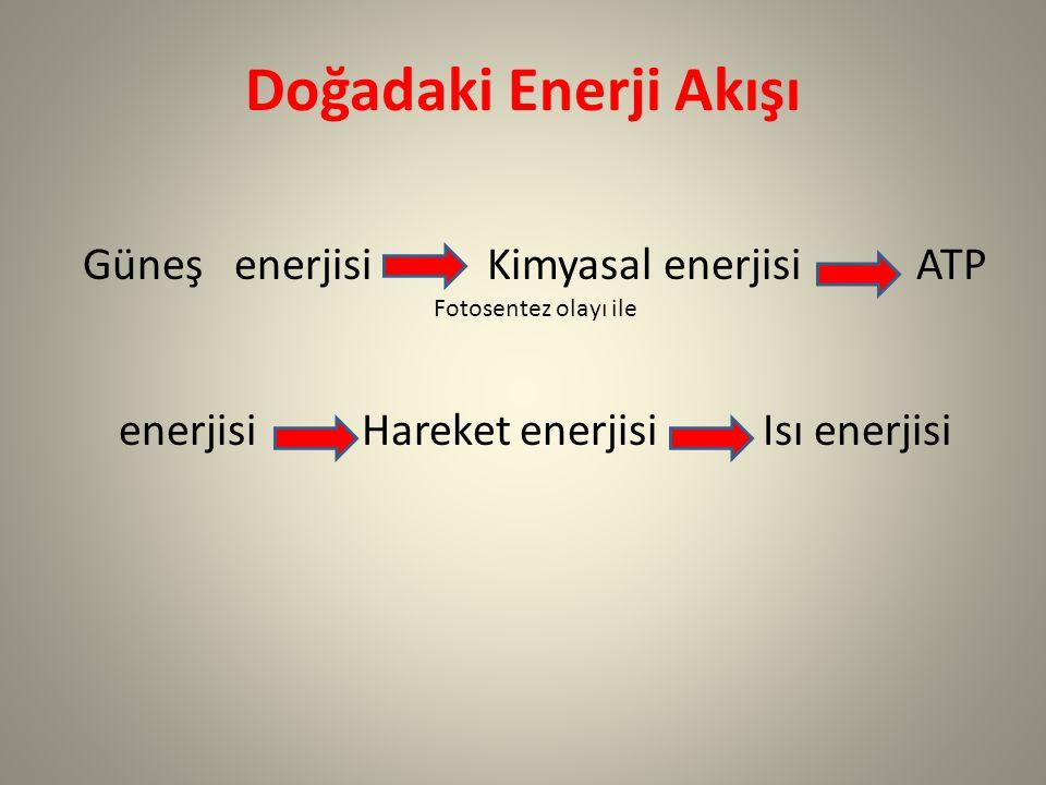 Doğadaki Enerji Akışı Güneş enerjisi Kimyasal enerjisi ATP Fotosentez olayı ile.