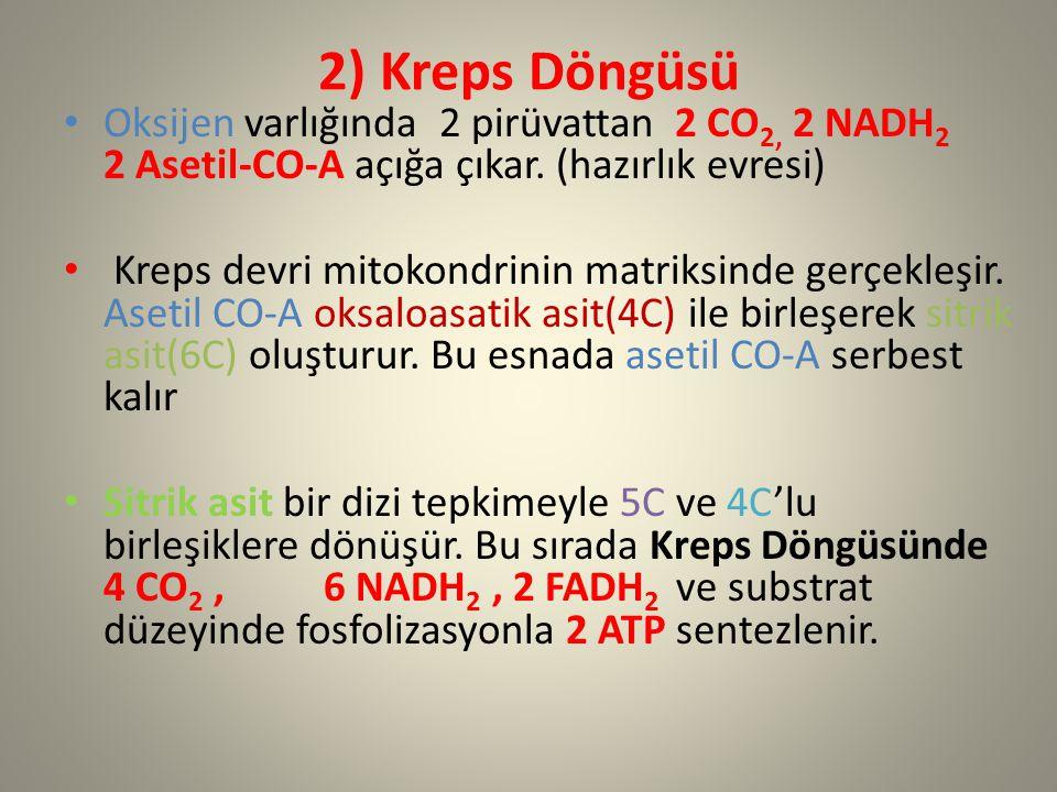 2) Kreps Döngüsü Oksijen varlığında 2 pirüvattan 2 CO2, 2 NADH2 2 Asetil-CO-A açığa çıkar. (hazırlık evresi)