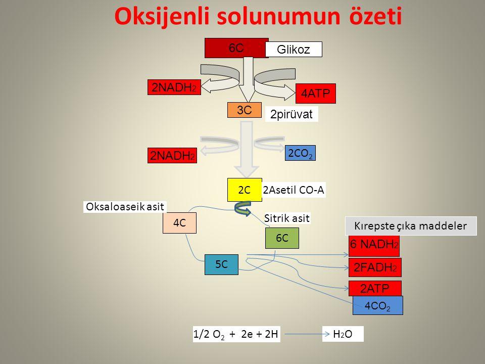 Oksijenli solunumun özeti