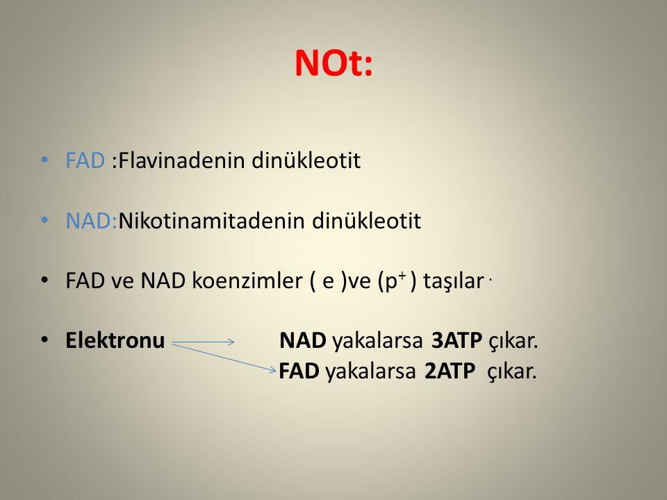 NOt: FAD :Flavinadenin dinükleotit NAD:Nikotinamitadenin dinükleotit