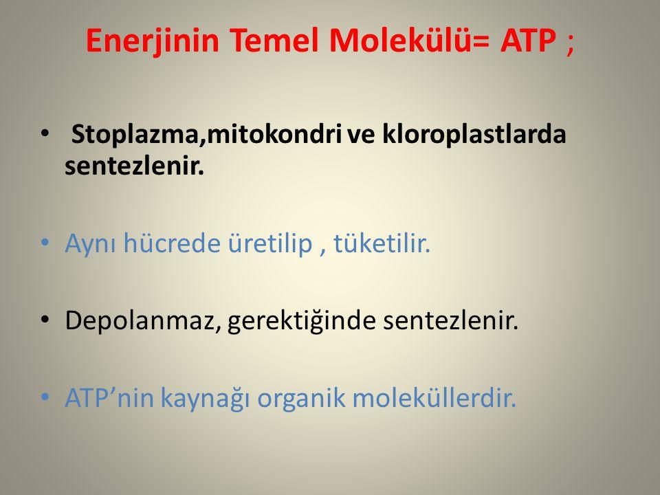 Enerjinin Temel Molekülü= ATP ;