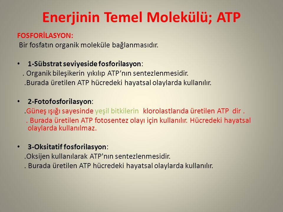 Enerjinin Temel Molekülü; ATP