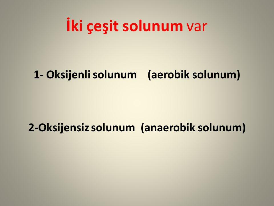 İki çeşit solunum var 1- Oksijenli solunum (aerobik solunum)