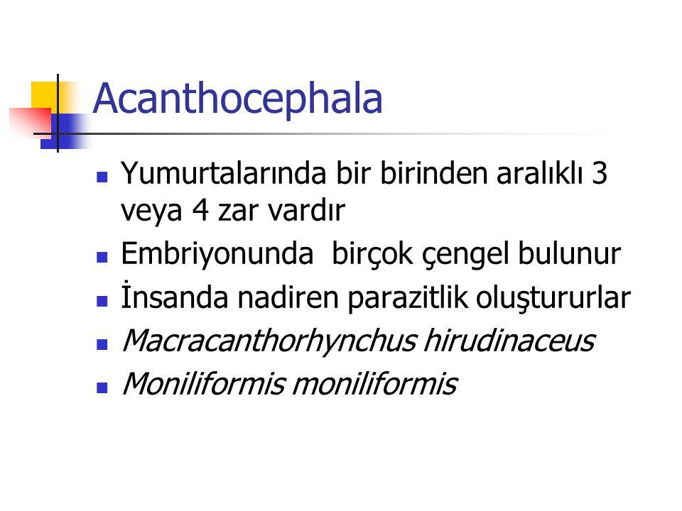 Acanthocephala Yumurtalarında bir birinden aralıklı 3 veya 4 zar vardır. Embriyonunda birçok çengel bulunur.
