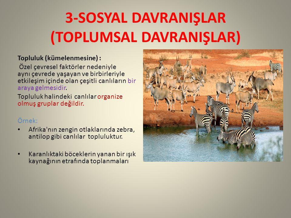 3-SOSYAL DAVRANIŞLAR (TOPLUMSAL DAVRANIŞLAR)
