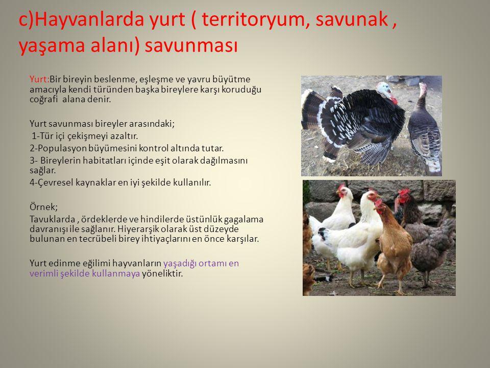 c)Hayvanlarda yurt ( territoryum, savunak , yaşama alanı) savunması