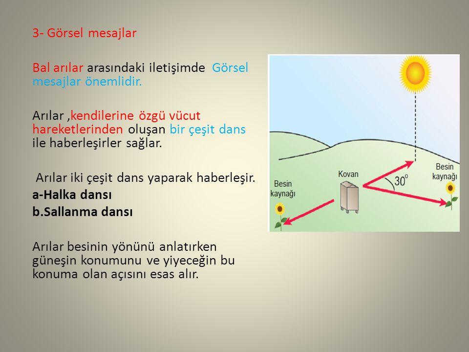 3- Görsel mesajlar Bal arılar arasındaki iletişimde Görsel mesajlar önemlidir.