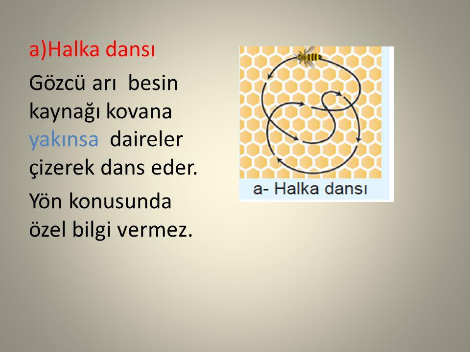 a)Halka dansı Gözcü arı besin kaynağı kovana yakınsa daireler çizerek dans eder.