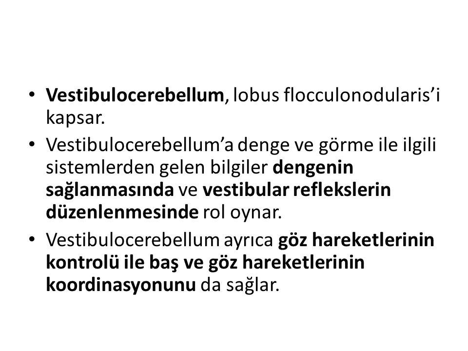 Vestibulocerebellum, lobus flocculonodularis'i kapsar.