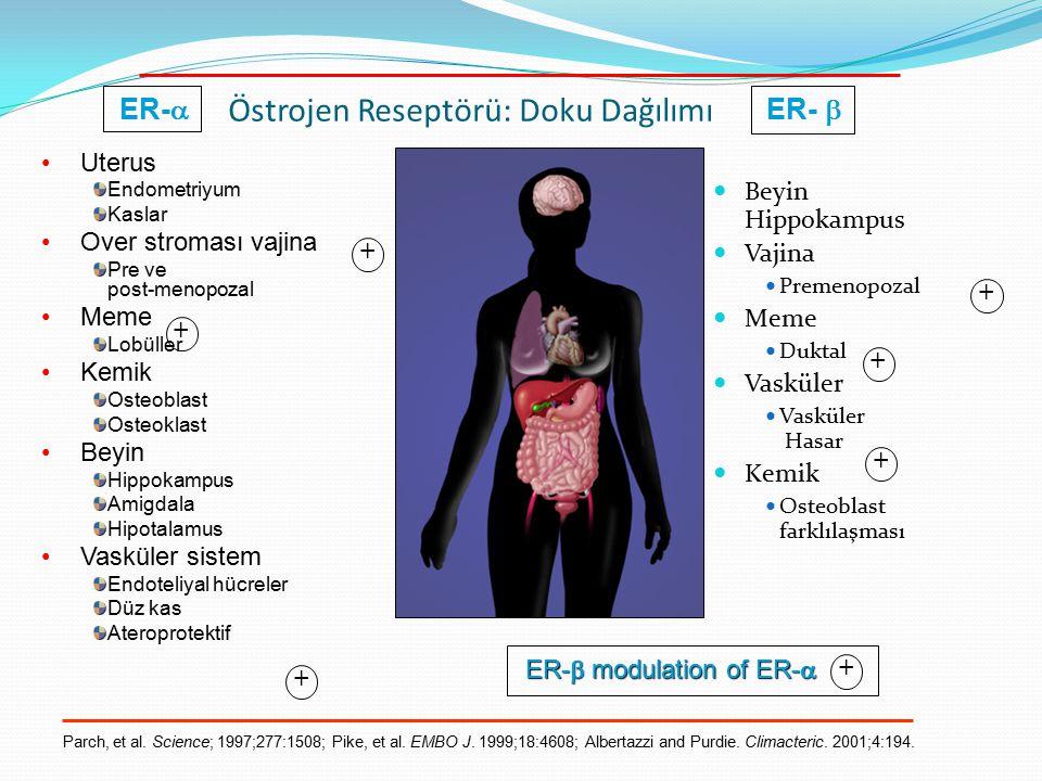 Östrojen Reseptörü: Doku Dağılımı