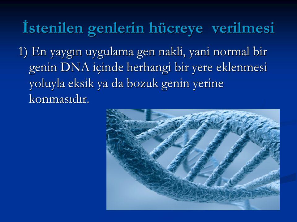 İstenilen genlerin hücreye verilmesi