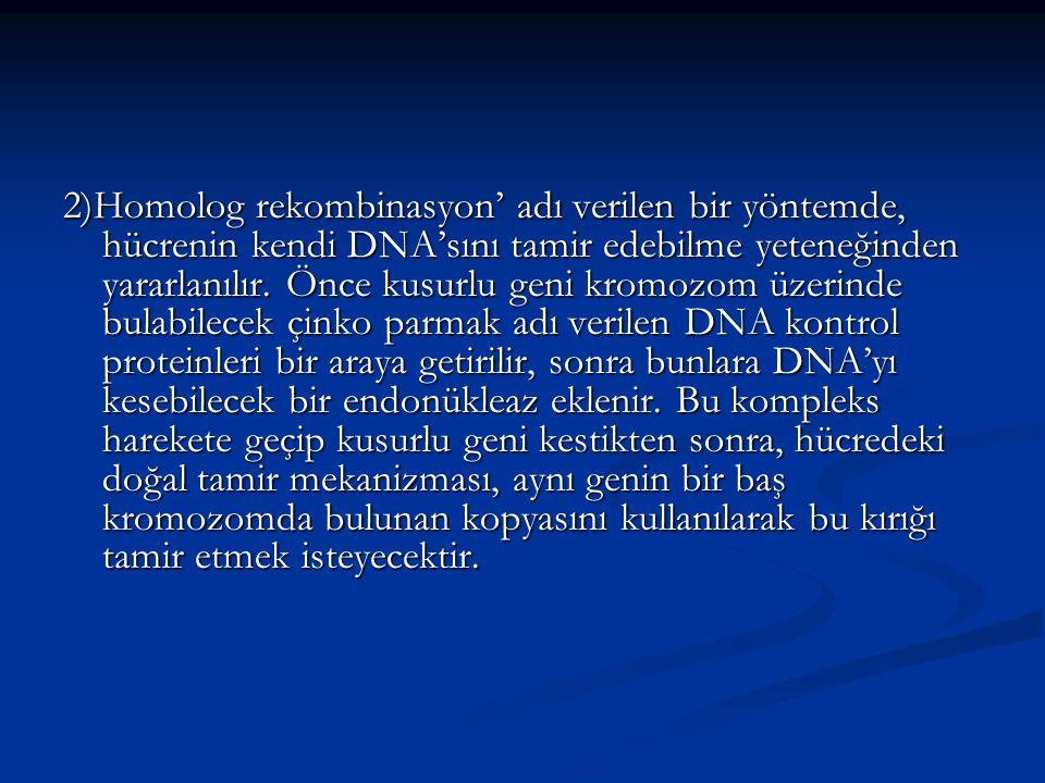 2)Homolog rekombinasyon' adı verilen bir yöntemde, hücrenin kendi DNA'sını tamir edebilme yeteneğinden yararlanılır.