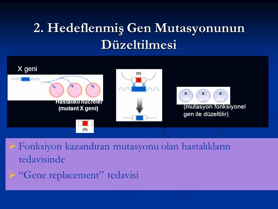 2. Hedeflenmiş Gen Mutasyonunun Düzeltilmesi