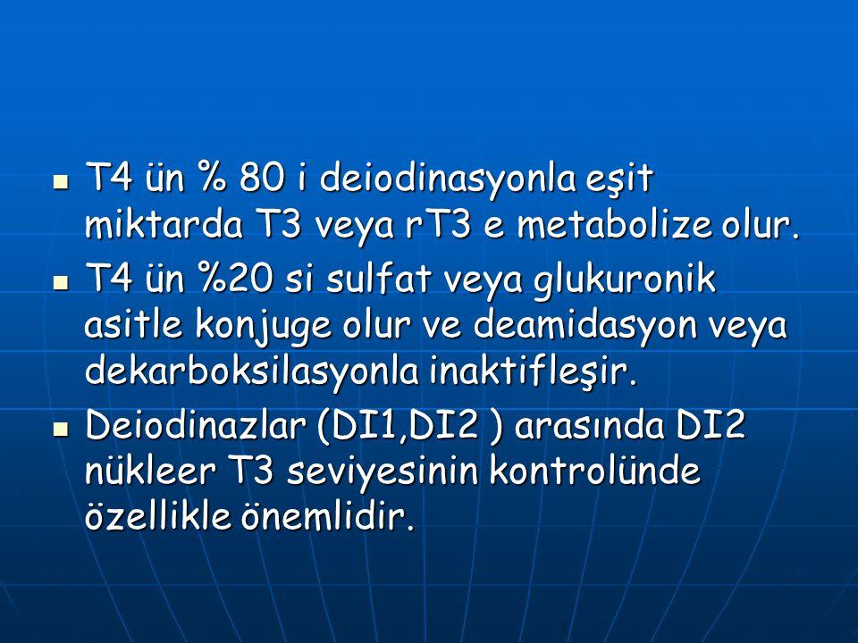 T4 ün % 80 i deiodinasyonla eşit miktarda T3 veya rT3 e metabolize olur.