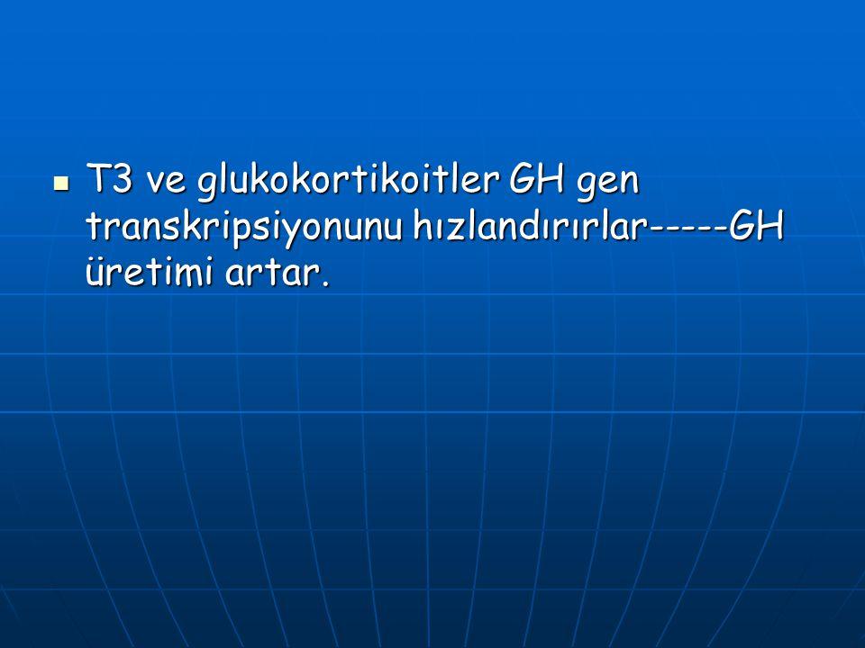 T3 ve glukokortikoitler GH gen transkripsiyonunu hızlandırırlar-----GH üretimi artar.
