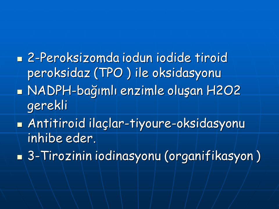 2-Peroksizomda iodun iodide tiroid peroksidaz (TPO ) ile oksidasyonu