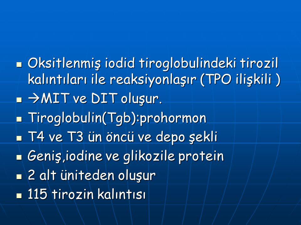 Oksitlenmiş iodid tiroglobulindeki tirozil kalıntıları ile reaksiyonlaşır (TPO ilişkili )