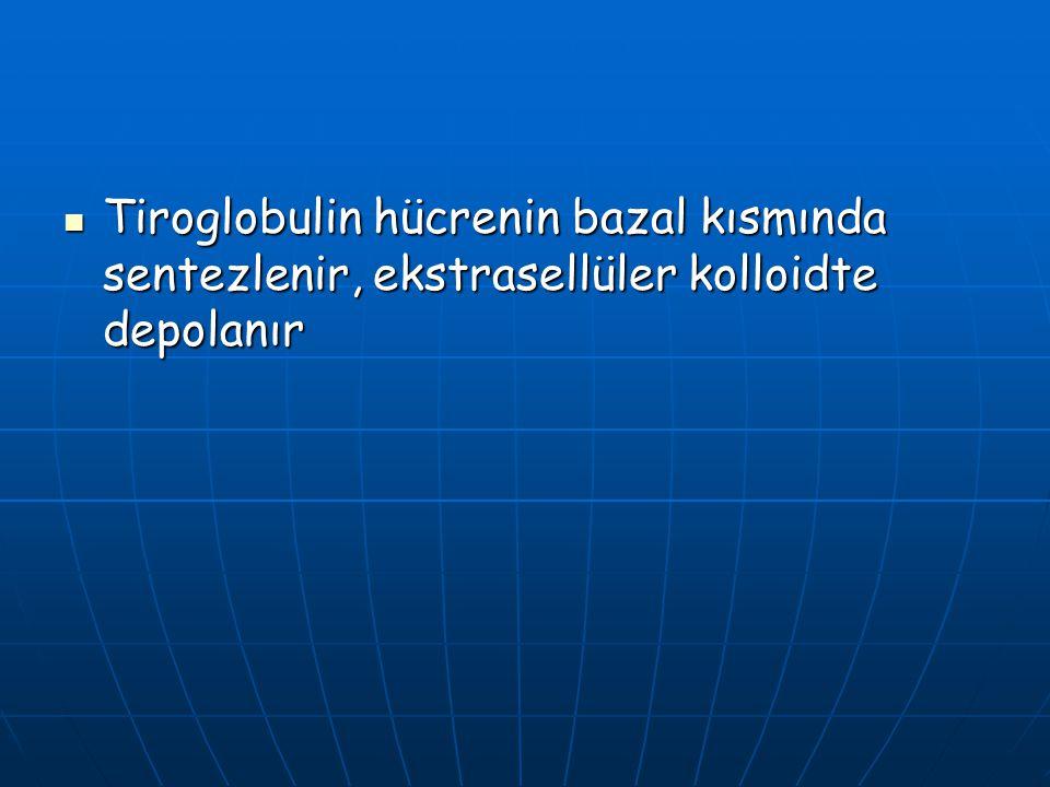 Tiroglobulin hücrenin bazal kısmında sentezlenir, ekstrasellüler kolloidte depolanır