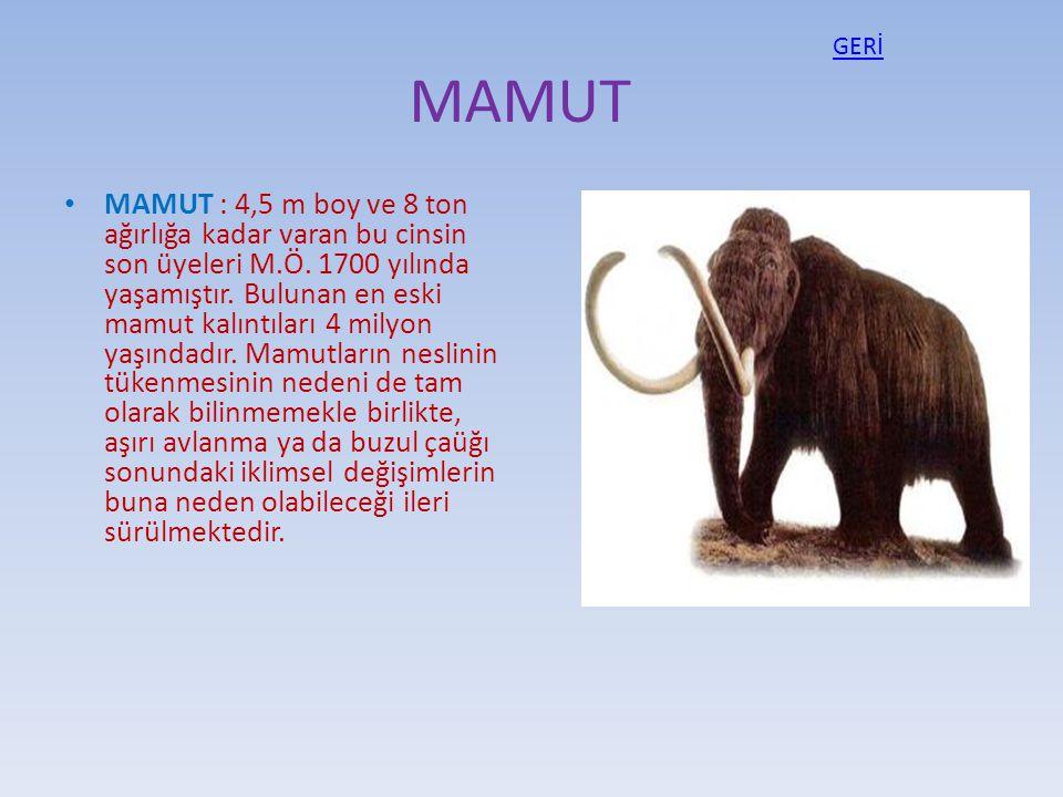 GERİ MAMUT.