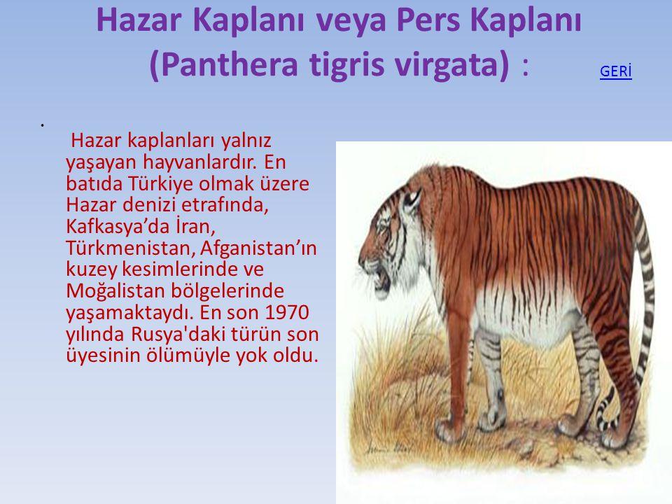 Hazar Kaplanı veya Pers Kaplanı (Panthera tigris virgata) :