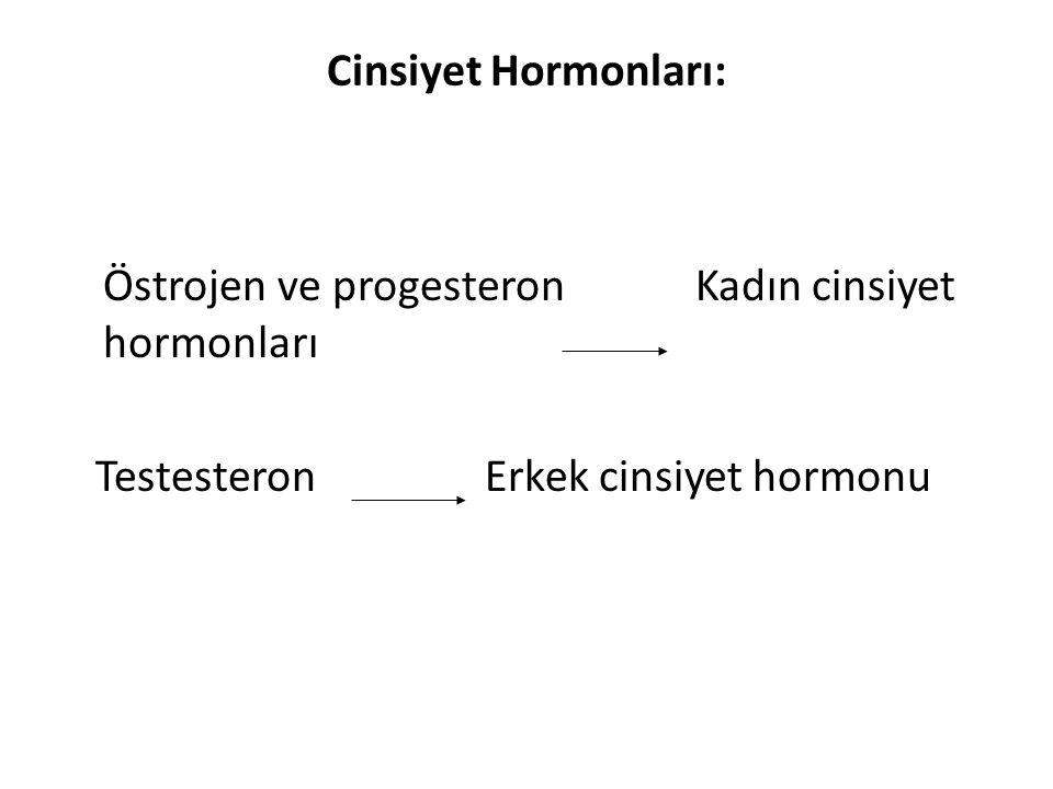 Cinsiyet Hormonları: Östrojen ve progesteron Kadın cinsiyet hormonları.