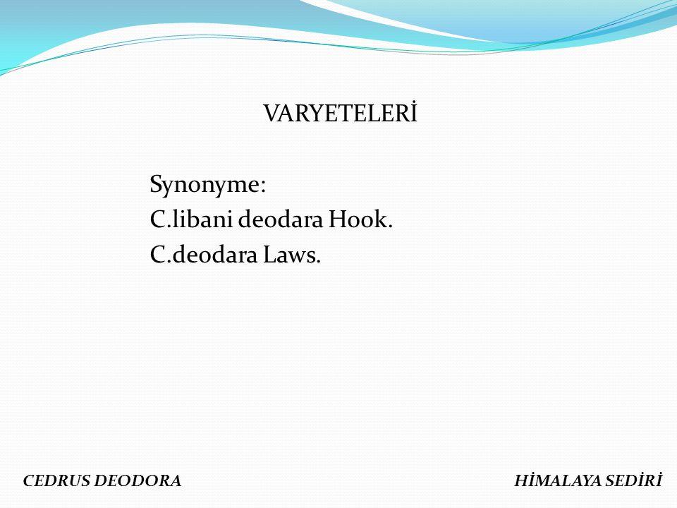 VARYETELERİ Synonyme: C.libani deodara Hook. C.deodara Laws.