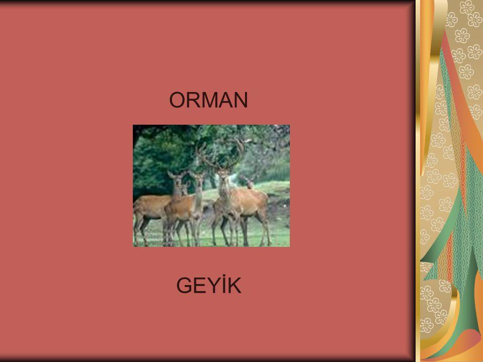 ORMAN GEYİK