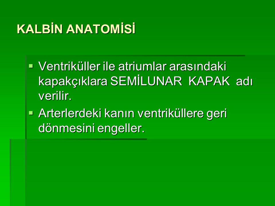 KALBİN ANATOMİSİ Ventriküller ile atriumlar arasındaki kapakçıklara SEMİLUNAR KAPAK adı verilir.