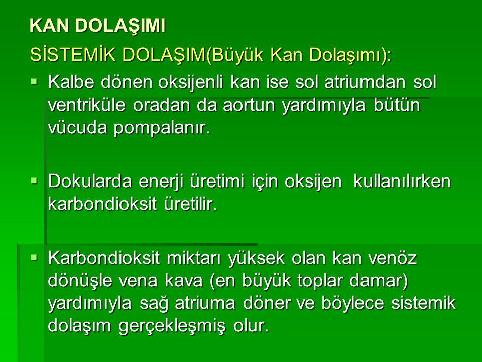 KAN DOLAŞIMI SİSTEMİK DOLAŞIM(Büyük Kan Dolaşımı):